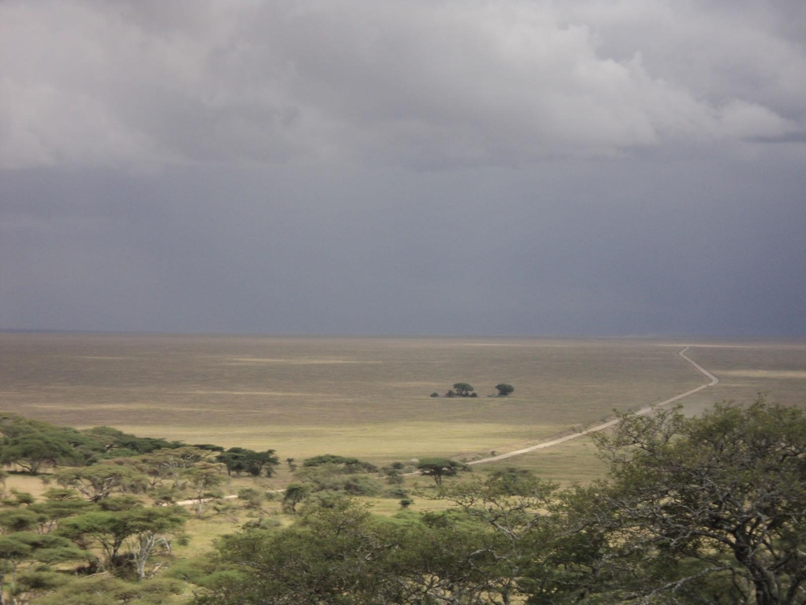 safari en tanzanie plaines du serengeti et crat re ngorongoro l 39 afrique v lo. Black Bedroom Furniture Sets. Home Design Ideas