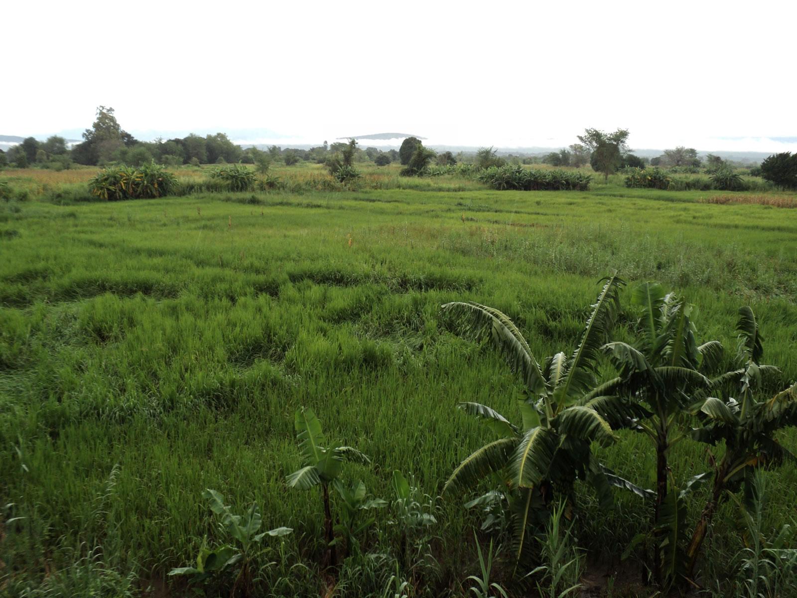 De mbeya chitinga beach 2 jours 251 km l 39 afrique v lo for Plantation beuh exterieur